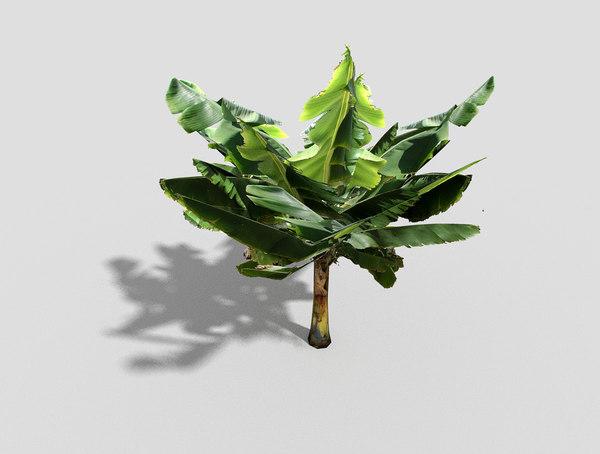banana tree obj