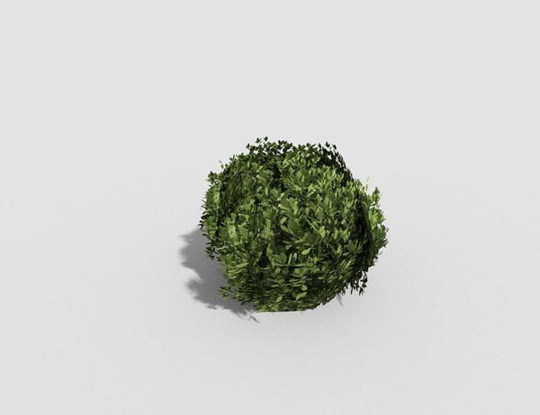 3d model tropical shrub