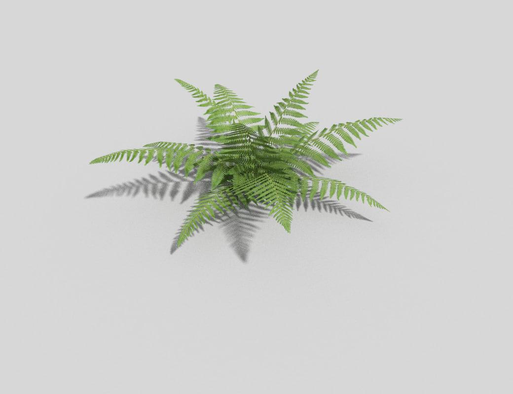 3d fern games