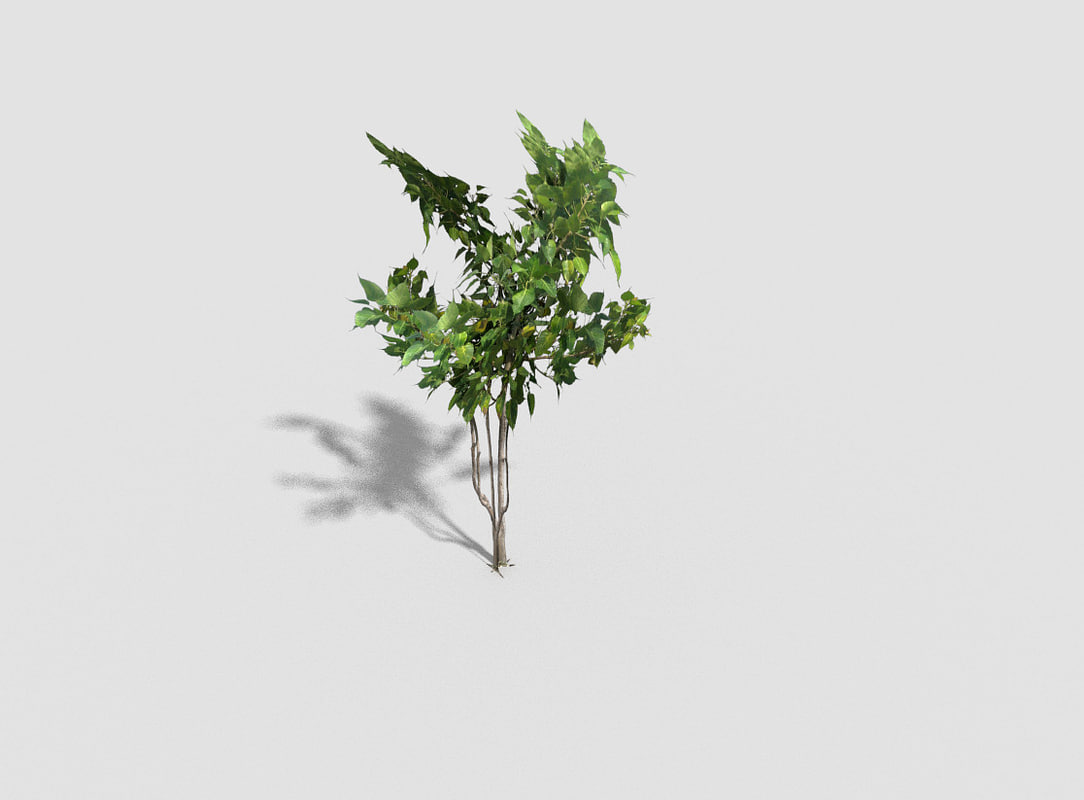 3d tropical shrub