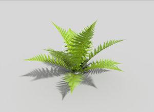 fern games 3d model