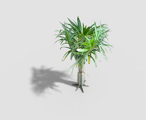 tropical tree 3d 3ds