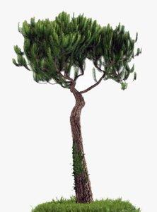 3d model pine trees