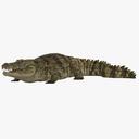 crocodile 3D models