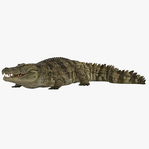 crocodile rigged 3d max