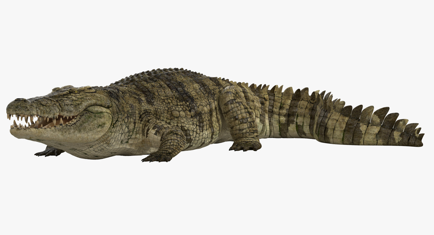 crocodile rigged 3d max