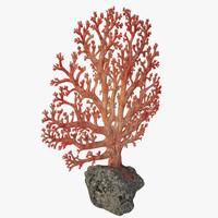 3d fan coral