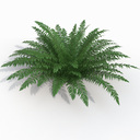 sword fern 3D models