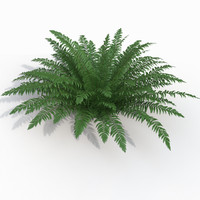 Realistic bush sword fern