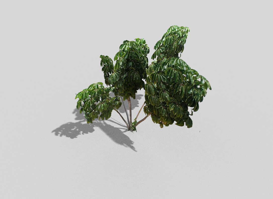tropical tree 3d model