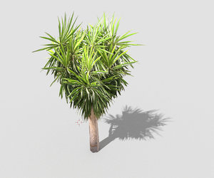 3d model tropical tree