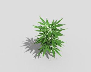 3d plant pot model