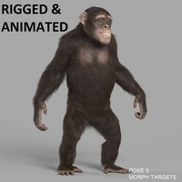 chimp - RIGGED and ANIMATED