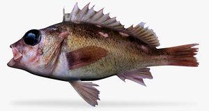 honeycomb rockfish 3d model