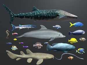 3d model of coral reef fish