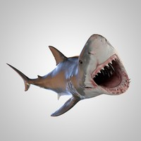 great white shark rigged 3d max