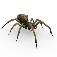 3d model wolf spider animations