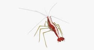 cleaner shrimp 3d model