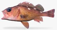 honeycomb rockfish 3d fbx