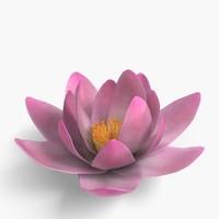 free max model flower