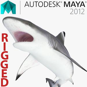 blacktip reef shark rigged ma