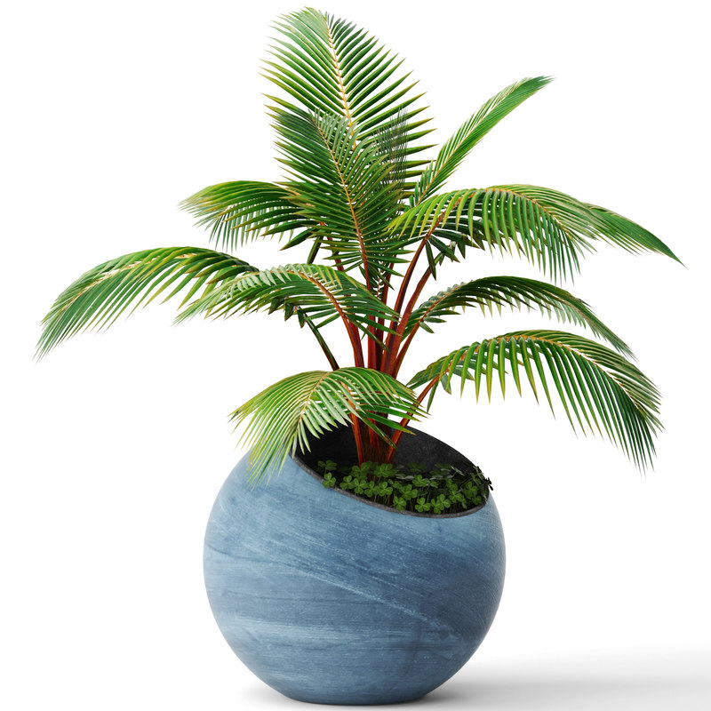 coconut palm 3d max