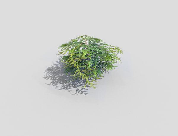 shrub 3ds