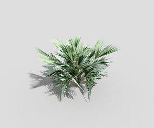 shrub tropical 3ds