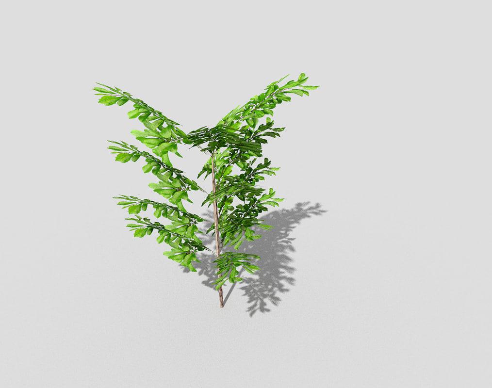 blend plant