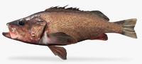 3d silvergray rockfish