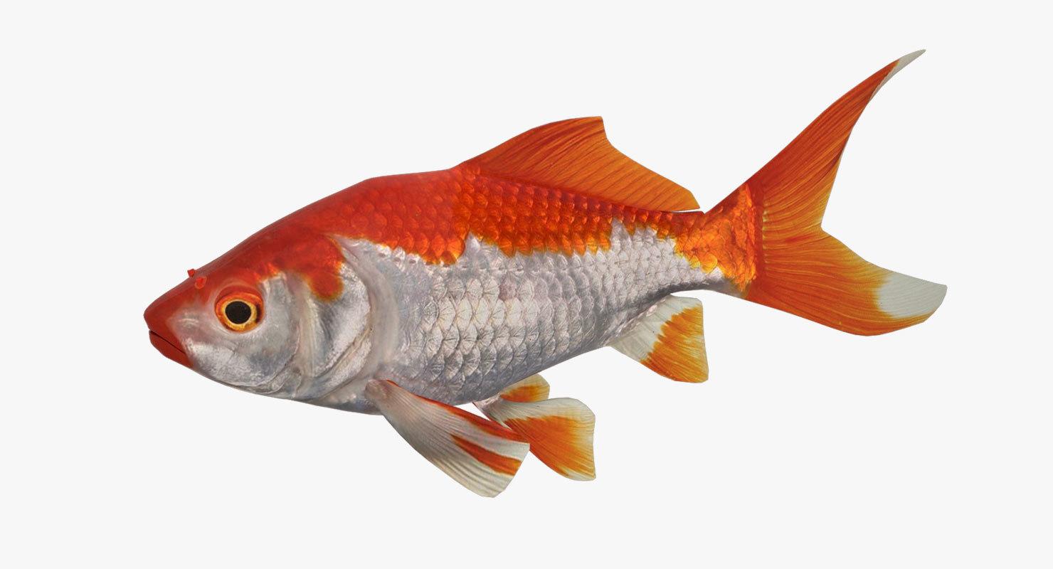 white golden fish 3ds