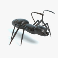 ant ready virtual 3d model