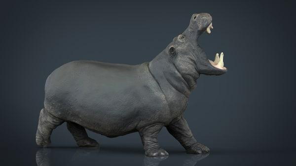 3d model hippopotamus