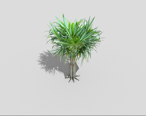tropical tree 3ds