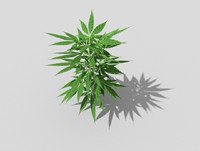 low poly pot plant