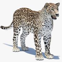 3d model persian leopard