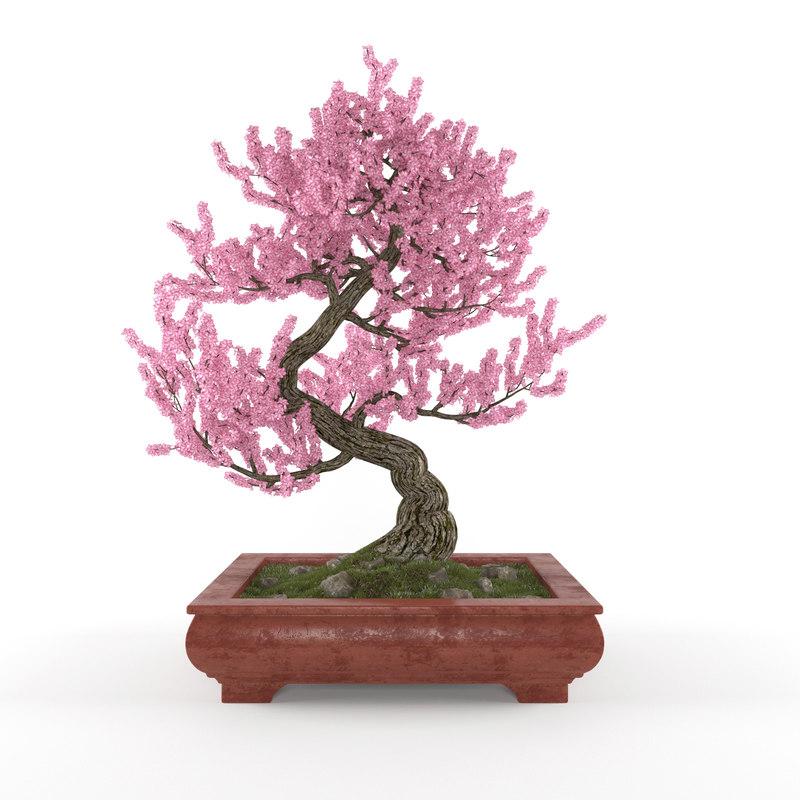 3d sakura bonsai model