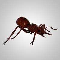 3d realistic ant rigged animation