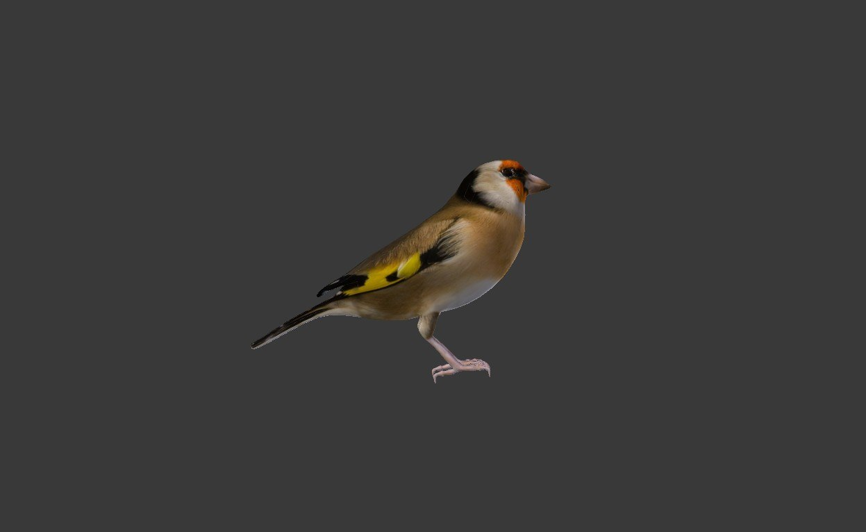 bird golden finch 3ds