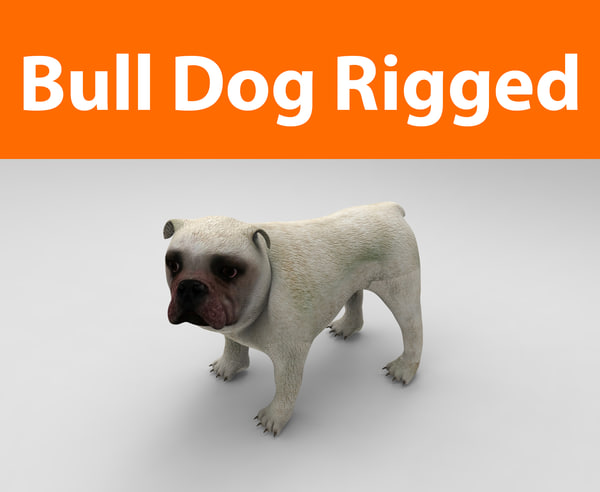 3d model bulldog rigged