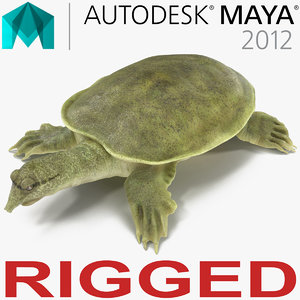 ma chinese softshell turtle rigged
