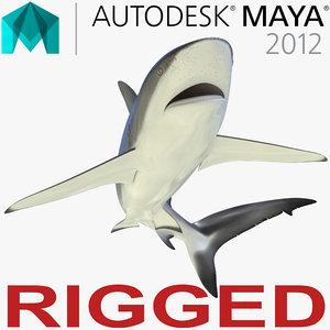 3d dusky shark rigged