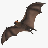 3d fruit bat flying