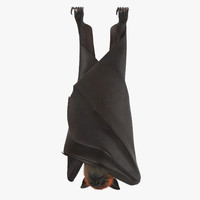 fruit bat hanging max