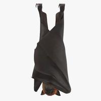 fruit bat hanging max