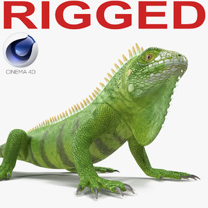 green iguana rigged 3d c4d