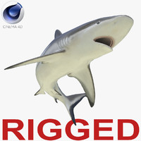 grey reef shark rigged 3d c4d