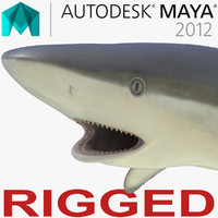 grey reef shark rigged 3d ma