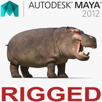 3d hippopotamus rigged