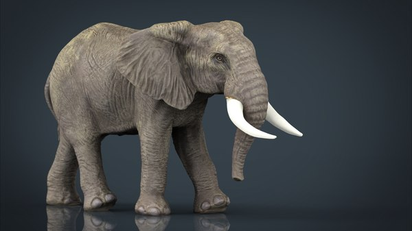 african elephant obj